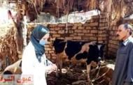 بيطري الشرقية يجري الترصد للأمراض الوبائية ب ٩٠ قرية و ٢٤ سوق للحفاظ على الثروة الحيوانية والداجنة وزيادتها