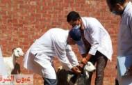 بيطري الشرقية يُحصن 42 ألف و156 رأس ماشية ضد الحمى القلاعية وحمى الوادى المتصدع وترقيم وتسجيل 4 آلاف و 958 رأس ماشية