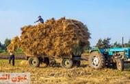 حصاد 226 ألف و 253 فدان أرز..وكبس وتجميع 271 ألف و 280 طن قش منذ بدء موسم الحصاد بالشرقية