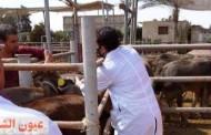 بيطري الشرقية: التأمين على 14 ألف و482 رأس ماشية