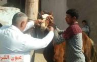 جامعة الزقازيق توجه قافلة طبية بيطرية إلي قرية أبو لطفي بأبوحماد وسط إجراءات إحترازية ووقائية مشددة