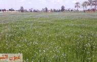 زراعة الشرقية تنفذ ندوة إرشادية عن زراعة محصول الكتان لمزارعي قرية ديرب السوق بديرب نجم