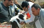 جامعة الزقازيق تنظم قافلة طبية بيطرية لقرية الشبانات