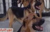 الكلاب الضـالة..خطر يغزو الشوارع..من حراس لقنبلة موقوتة فى عيون المجتمع