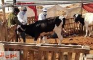 بيطري الشرقية يُحصن 393 ألف و258 رأس ماشية ويرقم ويسجل 9 آلاف و 826 رأس للوقاية من الحمي القلاعية وحمي الوادى المتصدع