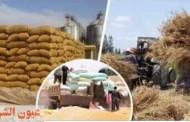 محافظ الشرقية : حصاد 291225 فدان قمح.. وتوريد 501851 طن و 992 كيلو للصوامع والشون