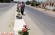 زراعة ٢٨ حوض زهور بمدخل الطريق الدائري بههيا لإضفاء المظهر الجمالي والحضاري