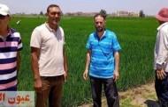 زراعة الشرقية تنفذ مدارس حقلية للنهوض بمحصول الأرز بمركزي أبو كبير وكفر صقر