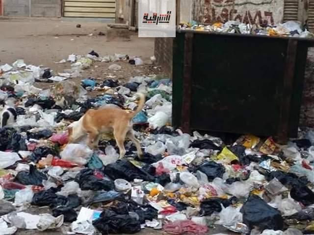 أهالى أبو كبير غاضبون من إنتشار القمامة والناموس وسط تجاهل المسؤولين