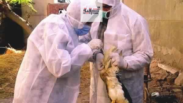 بيطري الشرقية يحصن 54 ألف و 695 طائر ضد مرض أنفلونزا الطيور