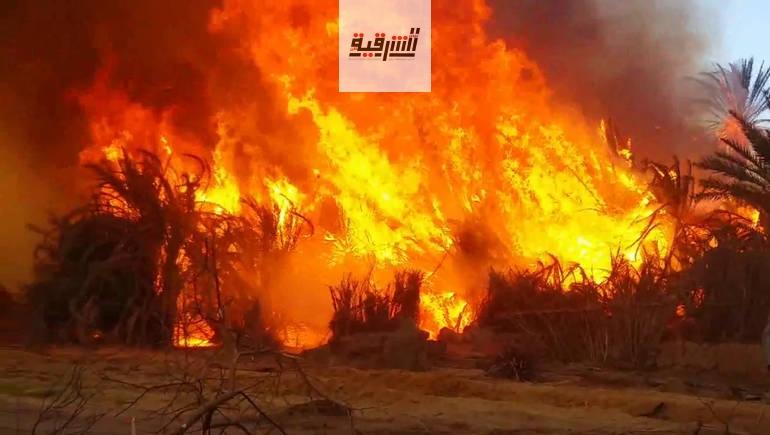 تدريب ميداني على مواجهة الحرائق بمحافظة المنوفية